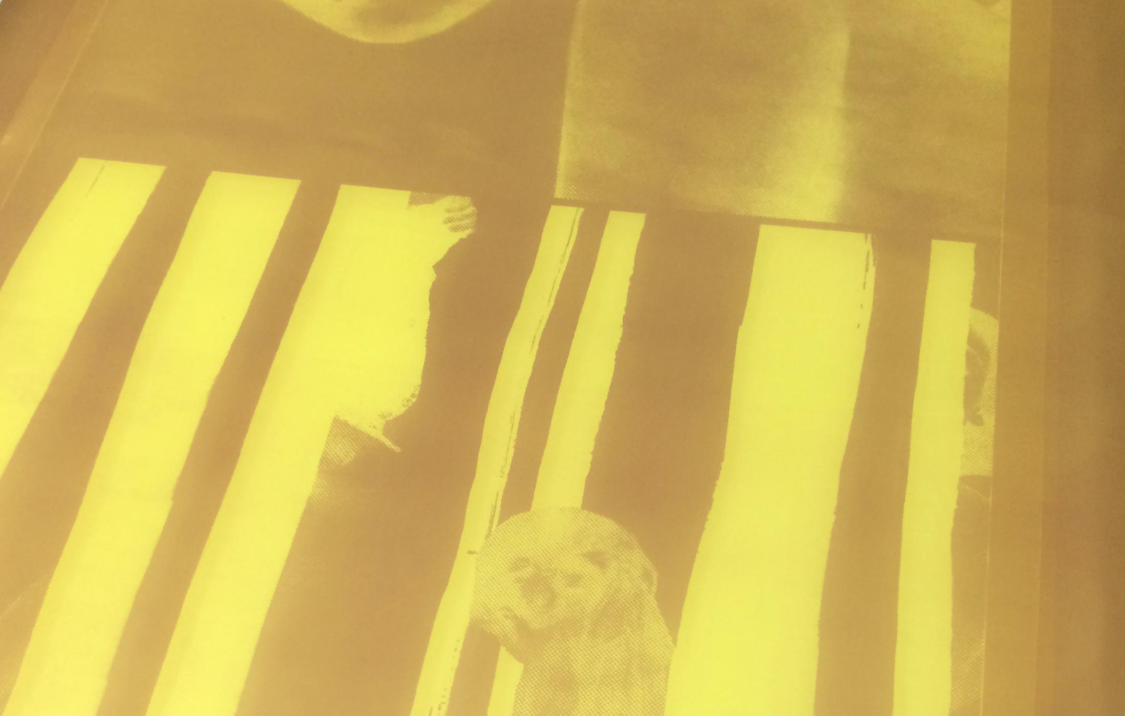 adamastor-studios-carapau-amarelo